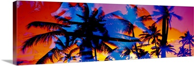 Silhouette of palm trees at sunset, Ko Olina, Oahu, Hawaii