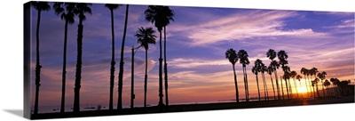 Silhouette of palm trees at sunset, Santa Barbara, California