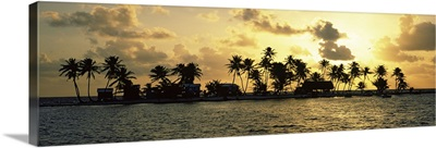 Silhouette of palm trees on an island at sunset, Laughing Bird Caye, Victoria Channel, Belize