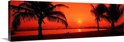 Silhouette of palm trees on the beach at dusk Lydgate Park Kauai Hawaii