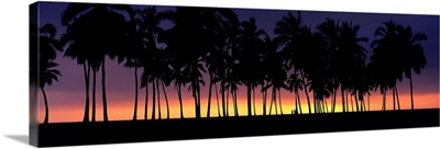 Silhouette of palm trees on the beach, Big Island, Hawaii II
