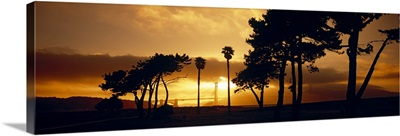 Silhouette of trees at sunset, Golden Gate Bridge, San Francisco, California