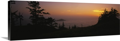 Silhouette of trees at sunset, Pacific Ocean, Boardman State Park, Oregon