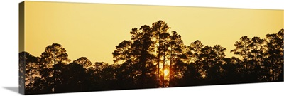 Silhouette of trees at sunset, The Golden Isles of Georgia, Georgia