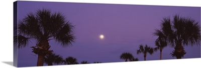 Silhouette of trees at sunset, Venice, Florida