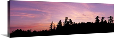 Silhouette of trees during sunset, Raquette Lake, Adirondack Mountains, New York State