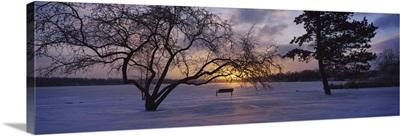 Silhouette of trees near a frozen lake, Reeds Lake, Grand Rapids, Michigan