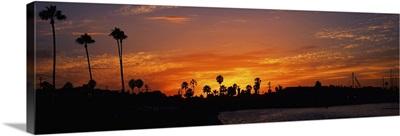 Silhouette of trees on the beach, Newport Beach, California