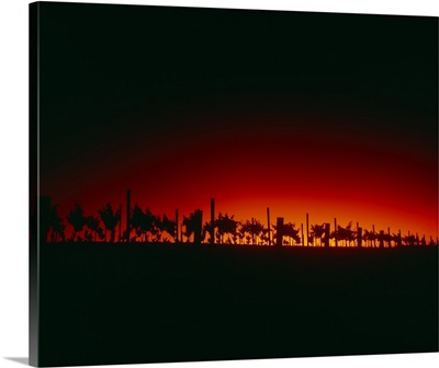 Silhouette of vineyards at dusk, Santa Barbara County, California