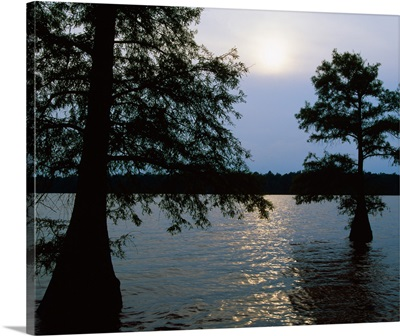 Silhouetted bald cypress trees (Taxodium distichum) in Lake Bolivar, Mississippi