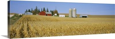 Silos and barns in a corn field, Minnesota