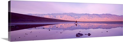 Single Woman Jogging Badwater Death Valley National Monument CA