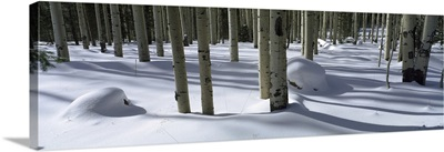 Snow covered landscape, Flagstaff, Coconino County, Arizona