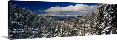 Snow covered pine trees in a forest with a lake in the background, Lake Tahoe, California