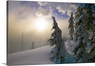 Snow-covered pine trees, sunrise through fog, Oregon Cascades, Oregon, united states,