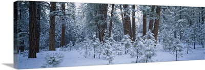 Snow covered plants in the forest