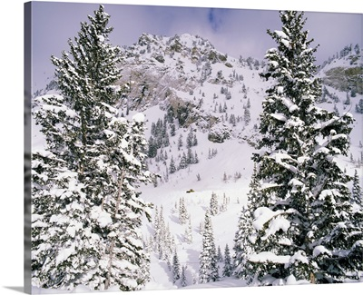 Snow covered trees on a mountain, Utah