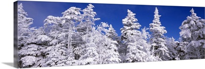 Snow covered trees, Stratton Mountain Resort, Stratton, Windham County, Vermont