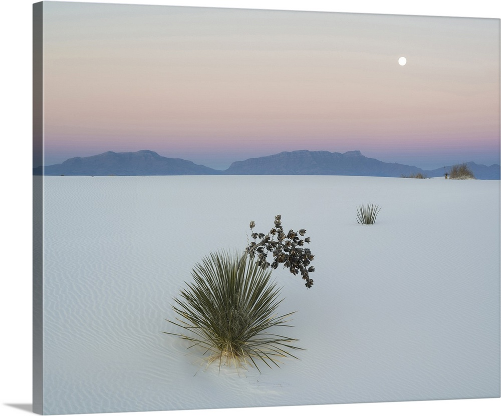 Soaptree Yucca White Sands National Monument New Mexico Wall Art Canvas Prints Framed Prints Wall Peels Great Big Canvas