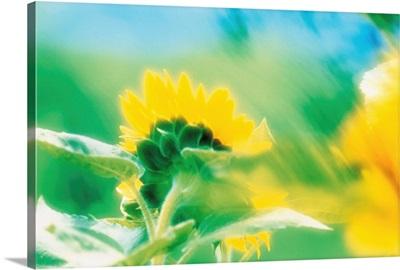 Soft focus of yellow flower