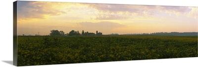 Soybean field at dusk, Illinois