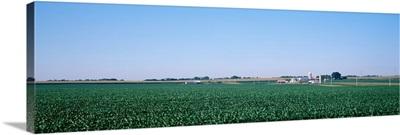 Soybean field Ogle Co IL