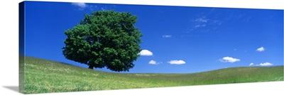 Spring Single Tree