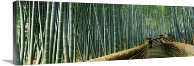 Stepped walkway passing through a bamboo forest, Arashiyama, Kyoto Prefecture, Kinki Region, Honshu, Japan