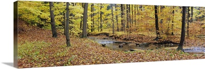 Stream flowing through a forest, Emery Park, East Aurora, Erie County, New York State