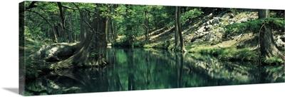 Stream in a forest, Honey Creek, Texas,