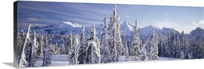 Subalpine fir trees (Abies lasiocarpa) covered with snow, Tatoosh Range, Mt Rainier National Park, Washington State