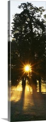 Sunbeam radiating through trees, Woodford County, Kentucky