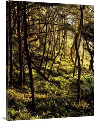Sunlight On Fern Plants Growing In Forest