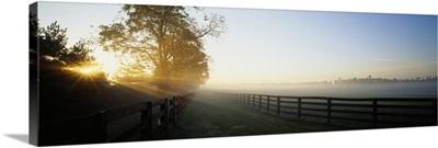 Sunlight passing through trees, Horse Farm, Woodford County, Kentucky