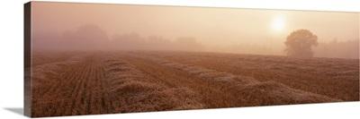 Sunrise Field Sweden