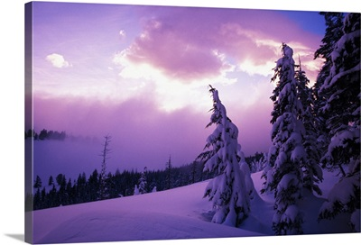 Sunrise light, snow-covered pine trees, Oregon Cascades, Oregon, united states,
