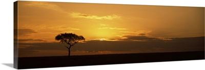Sunrise over a landscape, Masai Mara National Reserve, Kenya