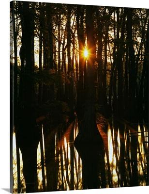 Sunrise through bald cypress trees (Taxodium distichum), water reflection, Horseshoe Lake Conservation Area, Illinois