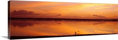 Sunset Crooked Tree Lagoon Belize