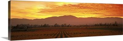 Sunset Napa Valley CA