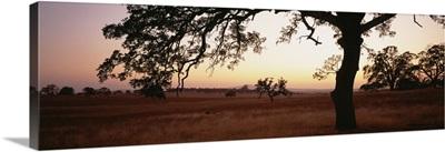Sunset Oak Trees Sierra Foothills CA