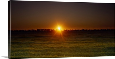 Sunset over a field, Sacramento County, California