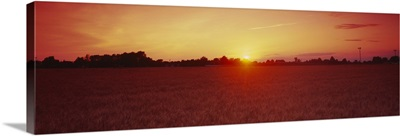 Sunset over a wheat field, Wood County, Ohio