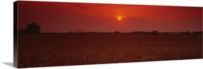 Sunset over a wheat field, Woodruff County, Arkansas