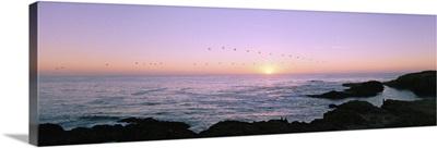 Sunset over the ocean with flock of birds, Mendocino, Mendocino County, California