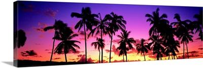 Sunset Palm Trees Oahu HI