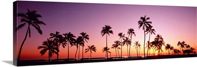 Sunset Palm Trees Oahu Island HI