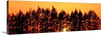 Sunset & Pines Hokkaido Japan