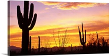 Sunset Saguaro Cactus Saguaro National Park AZ