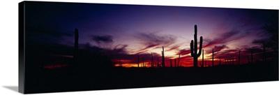 Sunset Saguaro National Monument AZ